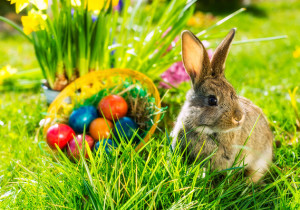 MW-BY227_easter_MG_20140403104916
